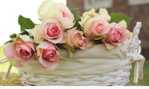 kvetoucí růže