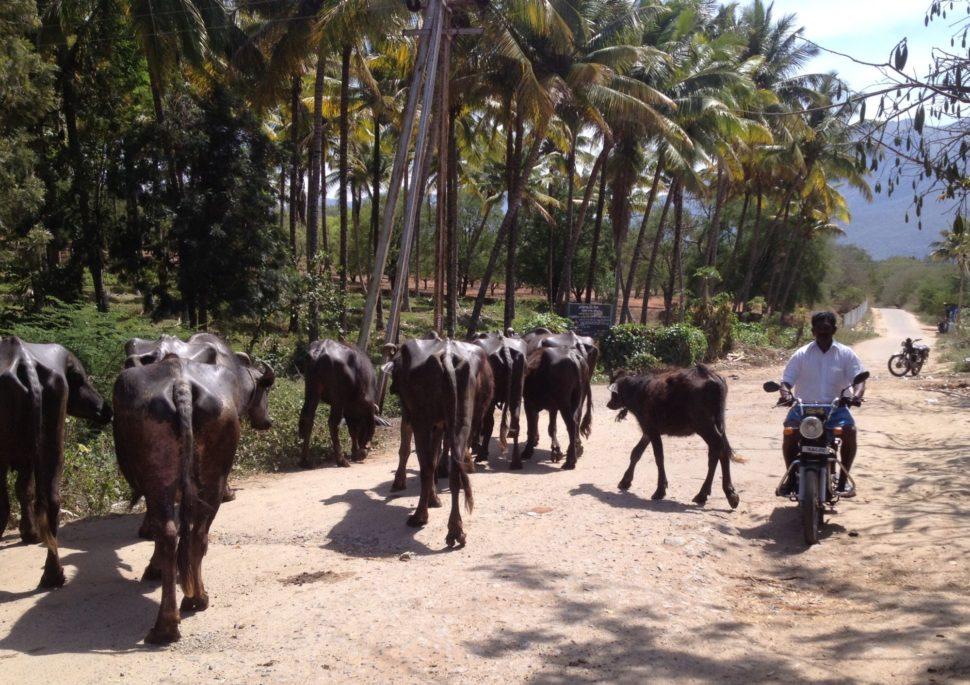 Cestování poIndii