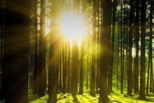 sluneční záře